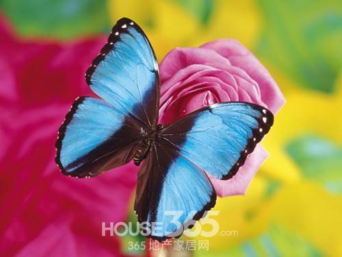你是否知道家居风水中的蝴蝶效应