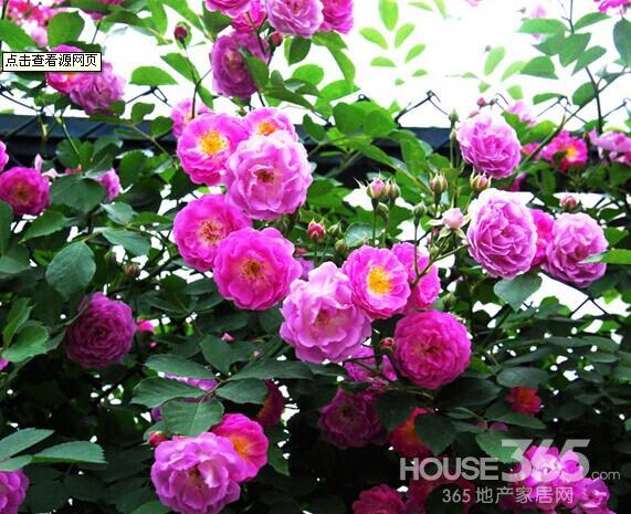 哪些花不适合放在卧室
