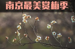光影石城181:独天下而春
