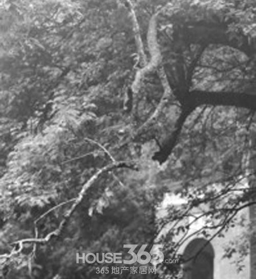 警方也希望破坏古树的游客能够主动到滁州市森林公安