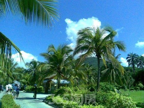 每天能够享受阳光的沐浴,聆听海浪的吟唱,还有青翠的椰子树,超高的负
