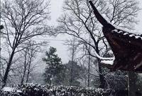 图集|杭城雪越下越大 微信朋友圈都被晒雪承包了