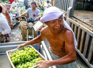 安徽果农销售葡萄队如长龙