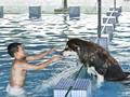 宠物泳池火爆 狗狗游泳90元需预约