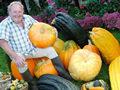 英国老人种巨型蔬菜 卷心菜直径9米南瓜90斤