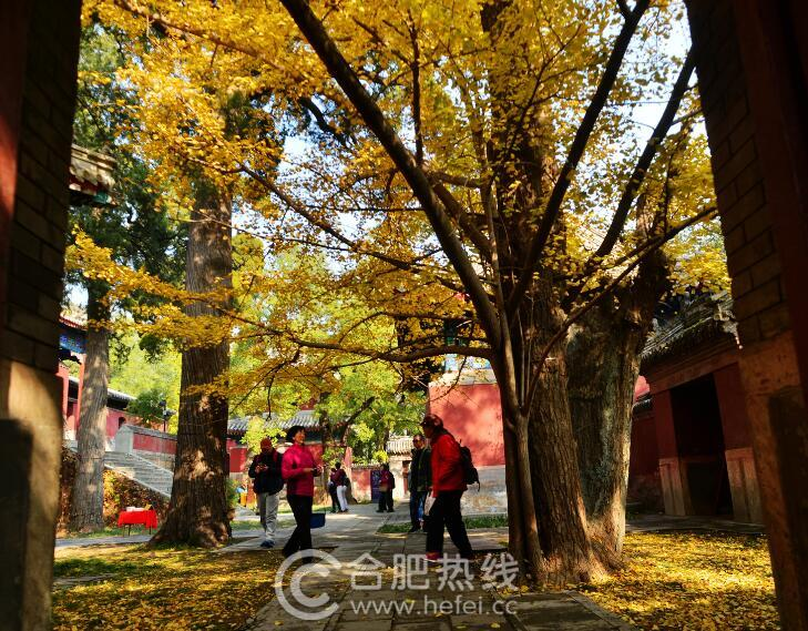 北京香山迎来赏红叶季节 吸引众多游客