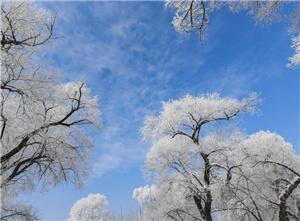 黑龙江牡丹江市现雾凇美景 冰天雪地美如画