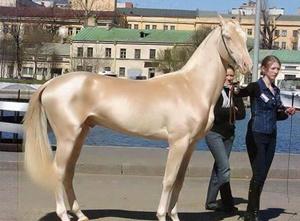"""超罕见品种 被称为来自""""天堂""""的马"""