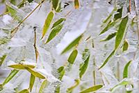 """组图:雨雪大风""""联手""""吹出奇特冰挂"""