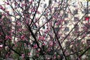 东紫园|匠心筑大城 细节景观小品抢先看