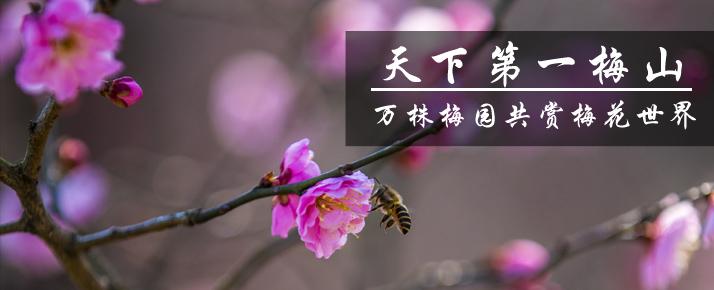 光影石城283:万株梅园共赏梅花世界