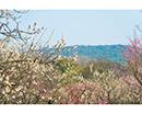 印象锡城第60期:无锡的春天从梅园开始