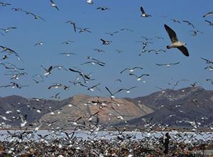 大连垃圾填埋场库容近饱和 或改建公园