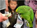 """郑州一岁鹦鹉是""""财迷"""" 能辨别纸币"""