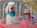 90岁患癌老人放弃治疗去旅行