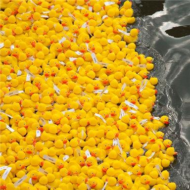 """西班牙举办""""小黄鸭""""游泳比赛"""