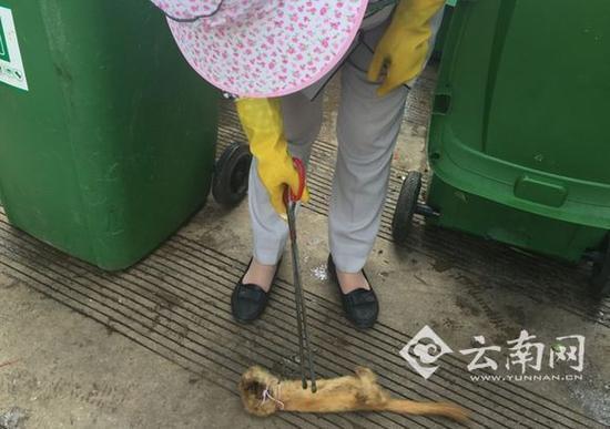 云南网在现场看到,这只动物没有四肢且身体内部是空的,耳朵和猫差不多