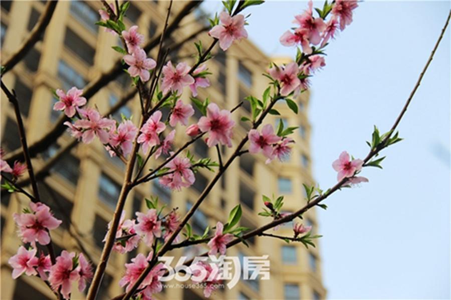 金浩仁和天地实景图(2017.4摄)
