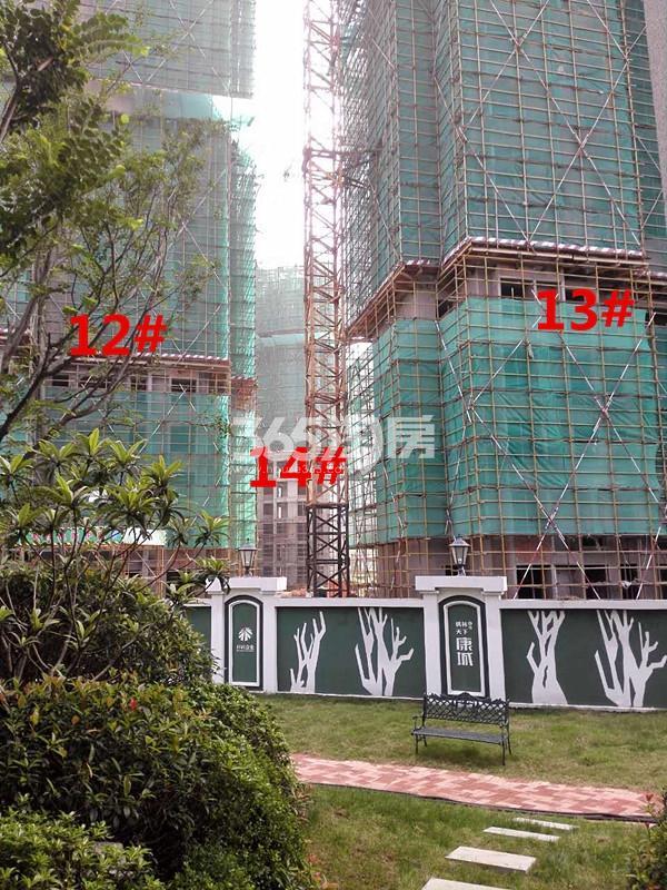 枫林天下康城高层12、13、14#楼在建实景图(9.11)