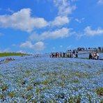 日本的蓝色